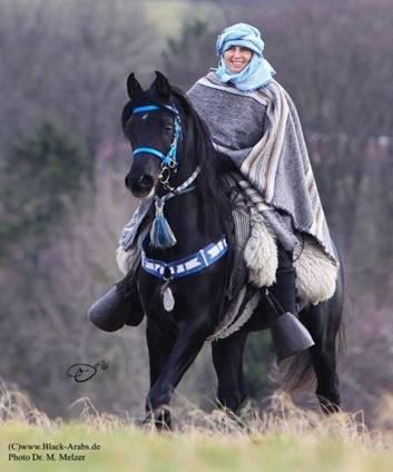 schwarze araber pferde
